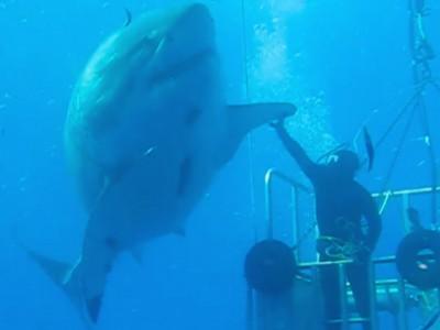 Monstres marins : beauté et fascination de ces incroyables animaux